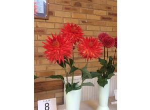 Produce to be exhibited at annual horticultural Autumn show this Saturday