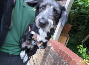 Owner who abandoned deformed puppy sought by council