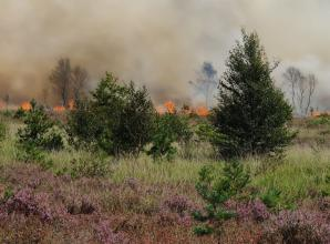 Royal Borough 'aware' of evacuated residents after major fire in Surrey