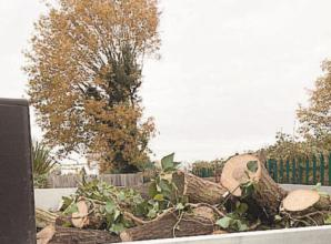 Residents shocked by dramatic tree cutting along Marlow-Maidenhead railway line