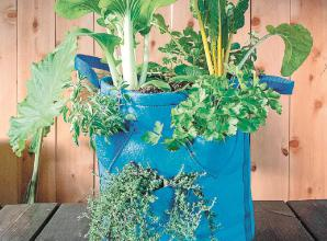 Six ways to use grow bags in small spaces